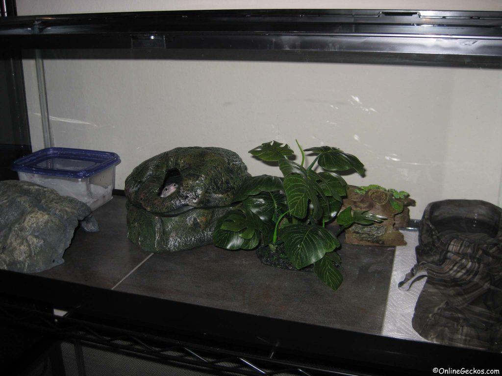 leopard gecko tank proper husbandry