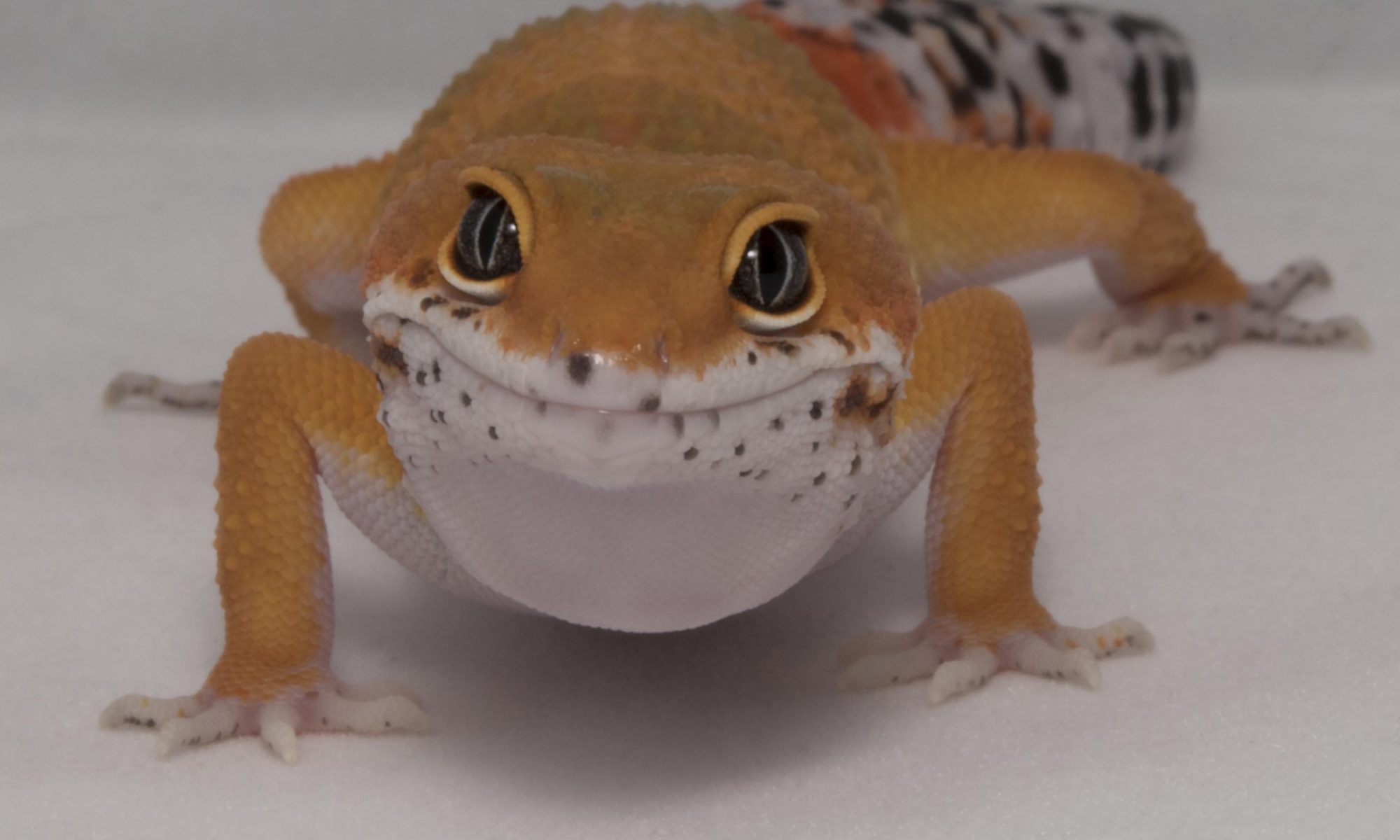 onlinegeckos.com 2017 holiday shipping schedule fedex
