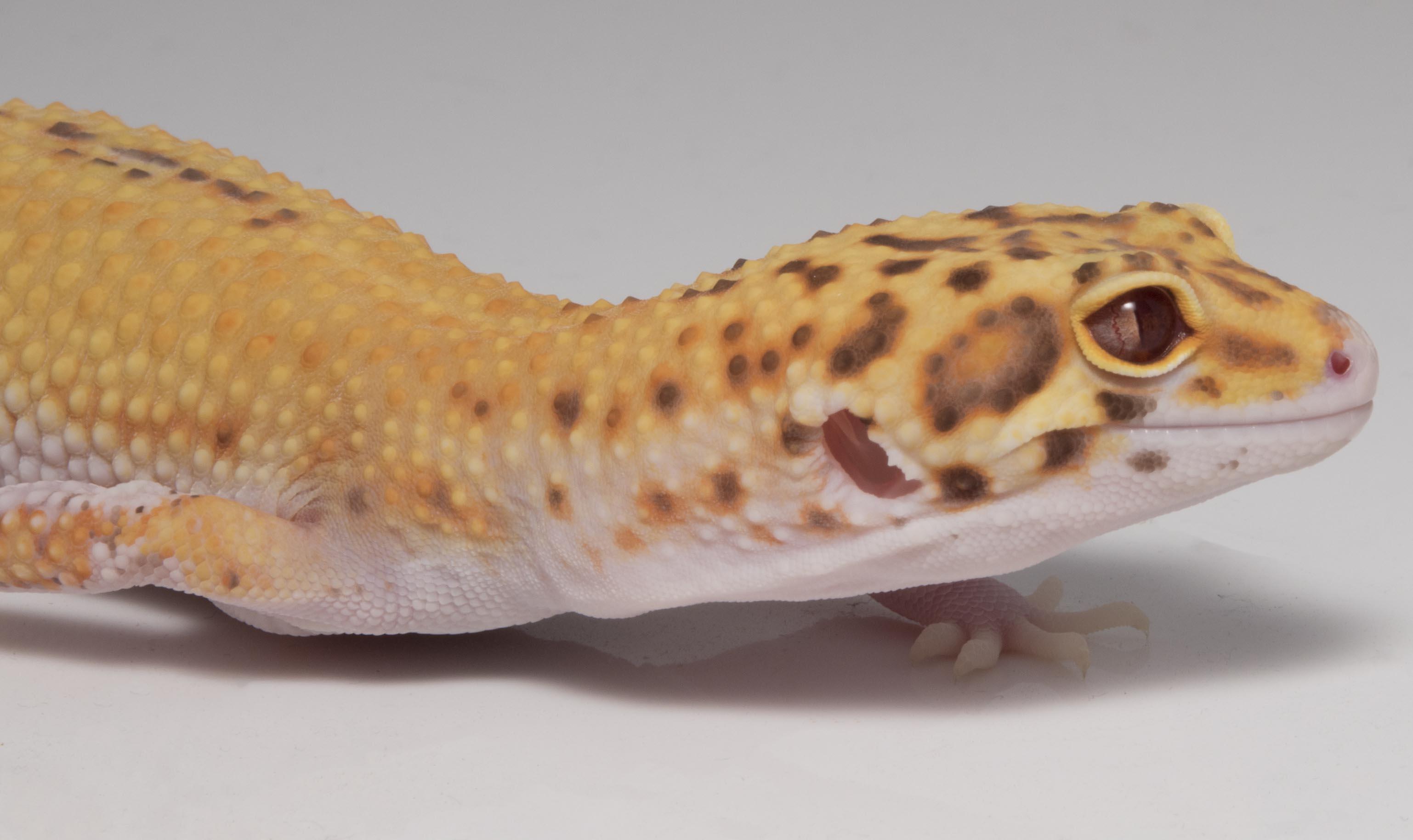 Mercury Vapor Bulb Reptile