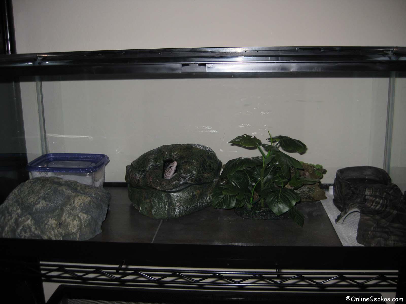 leopard gecko habitat terrarium tank setup